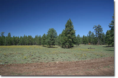 Horse Property In Flagstaff